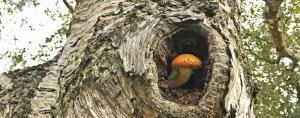 Fungi in a tree cavity on Barnes Common