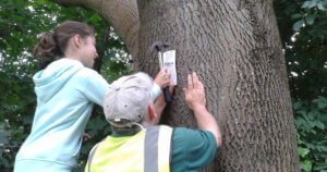 Ash Tag Project - monitoring trees on the Common