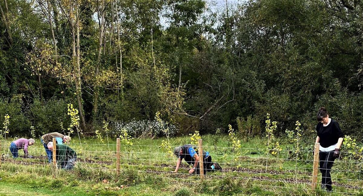 Conservation Volunteers working in the Black Poplar nursery